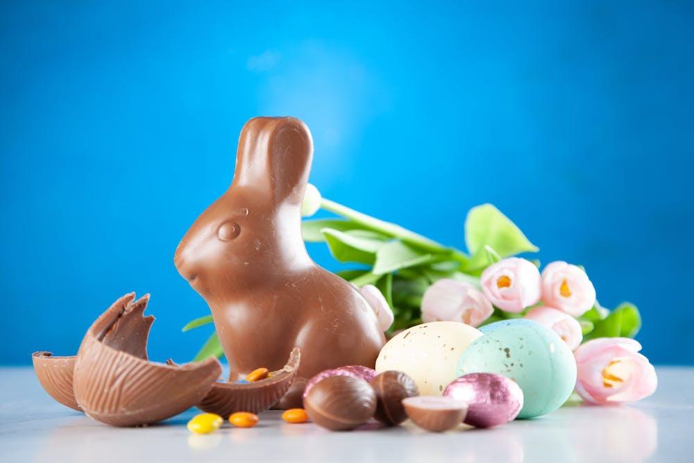 Bunny @pexels
