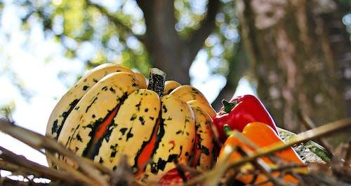 Безкоштовне стокове фото на тему «їжа, болгарський перець, вирощувати, гарбуз»