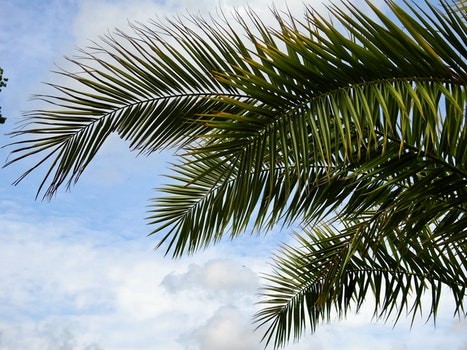 Green Palm Tree Under Blue Cloudy Sky during Daytime