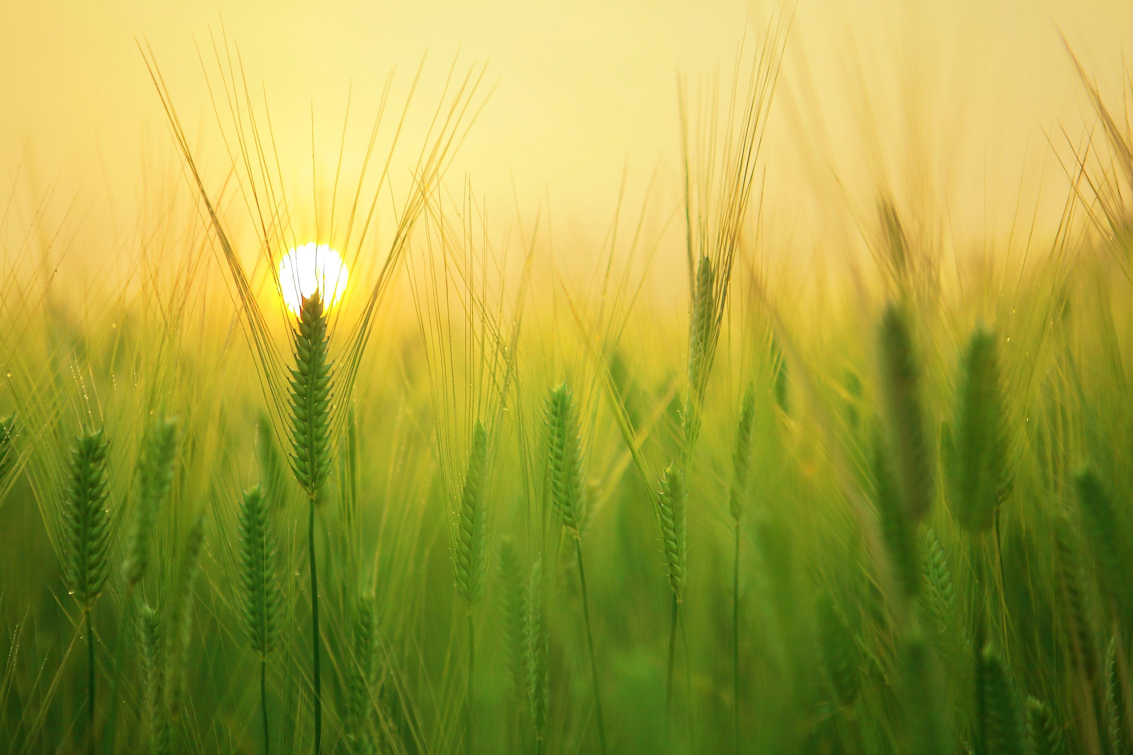 Kostenloses Stock Foto zu landschaft, feld, sonne, sonnenaufgang