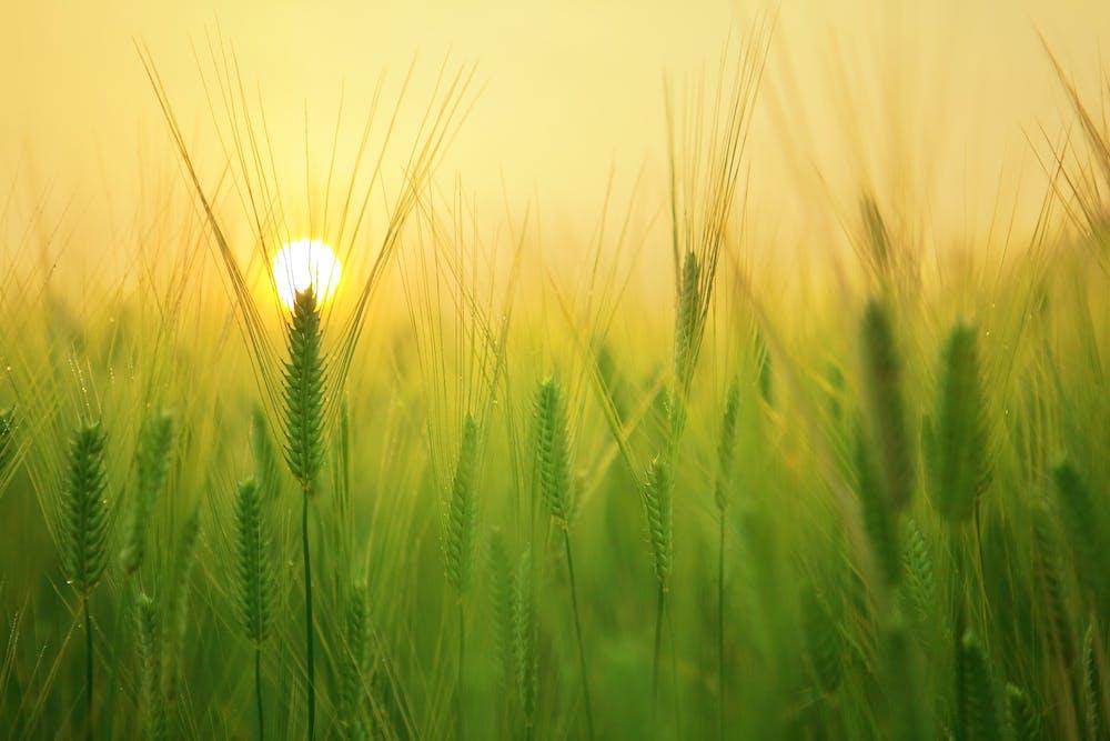 Sun Raising @Pexels