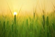 landscape, field, sun