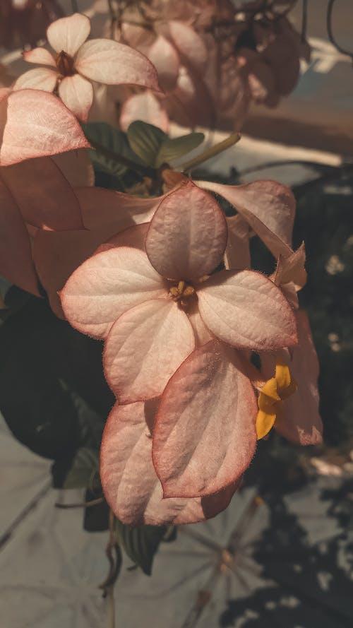 Kostnadsfri bild av amor, blommor, brasilien, flor
