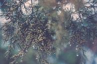 blur, tree, dew