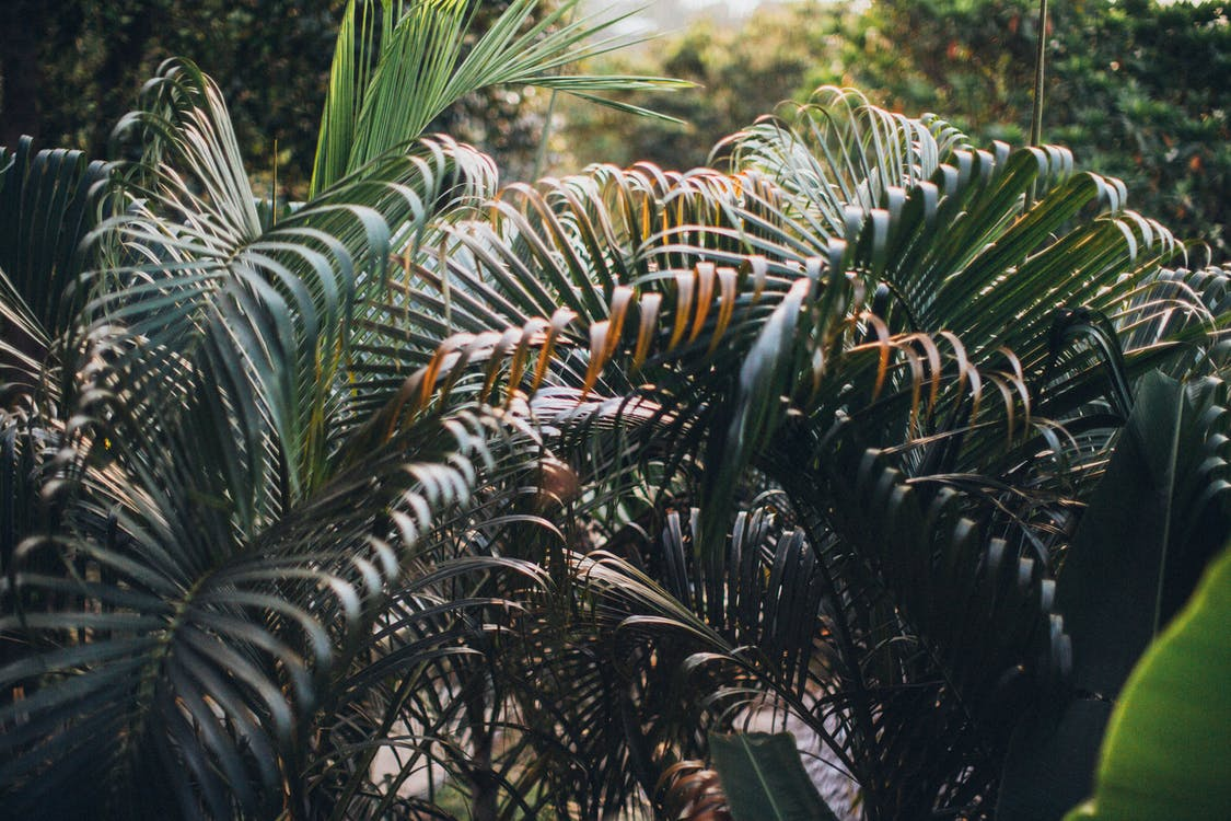 Green Palm Leafed Plants