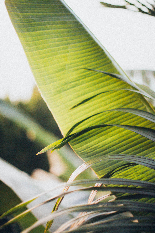 Gratis lagerfoto af bananblad, blomstrende, close-up, dagslys