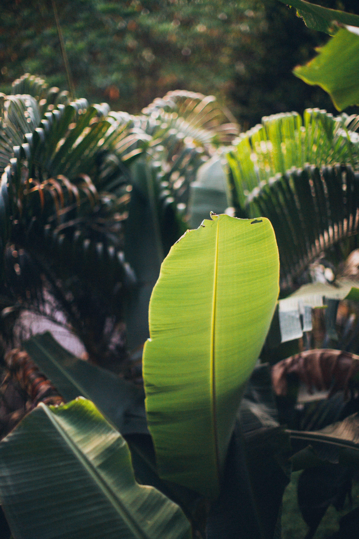 blühen, botanisch, botanischer garten