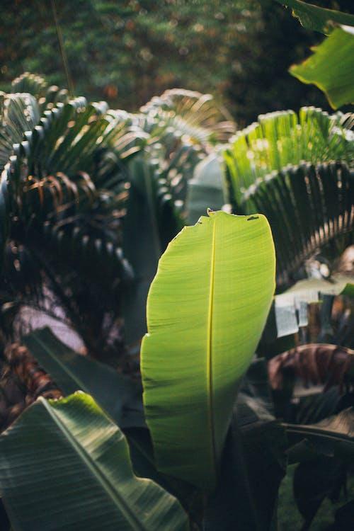 blomstrende, Botanisk, botanisk have