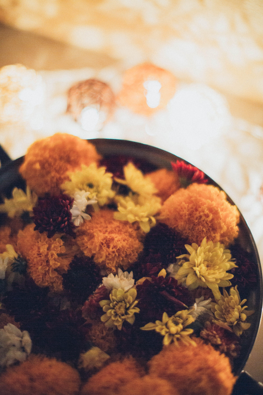 Kostnadsfri bild av blandad, blommor, färger, färsk