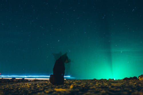 Dog Sitting on Ground Under Blue Starry Sky during Nighttime