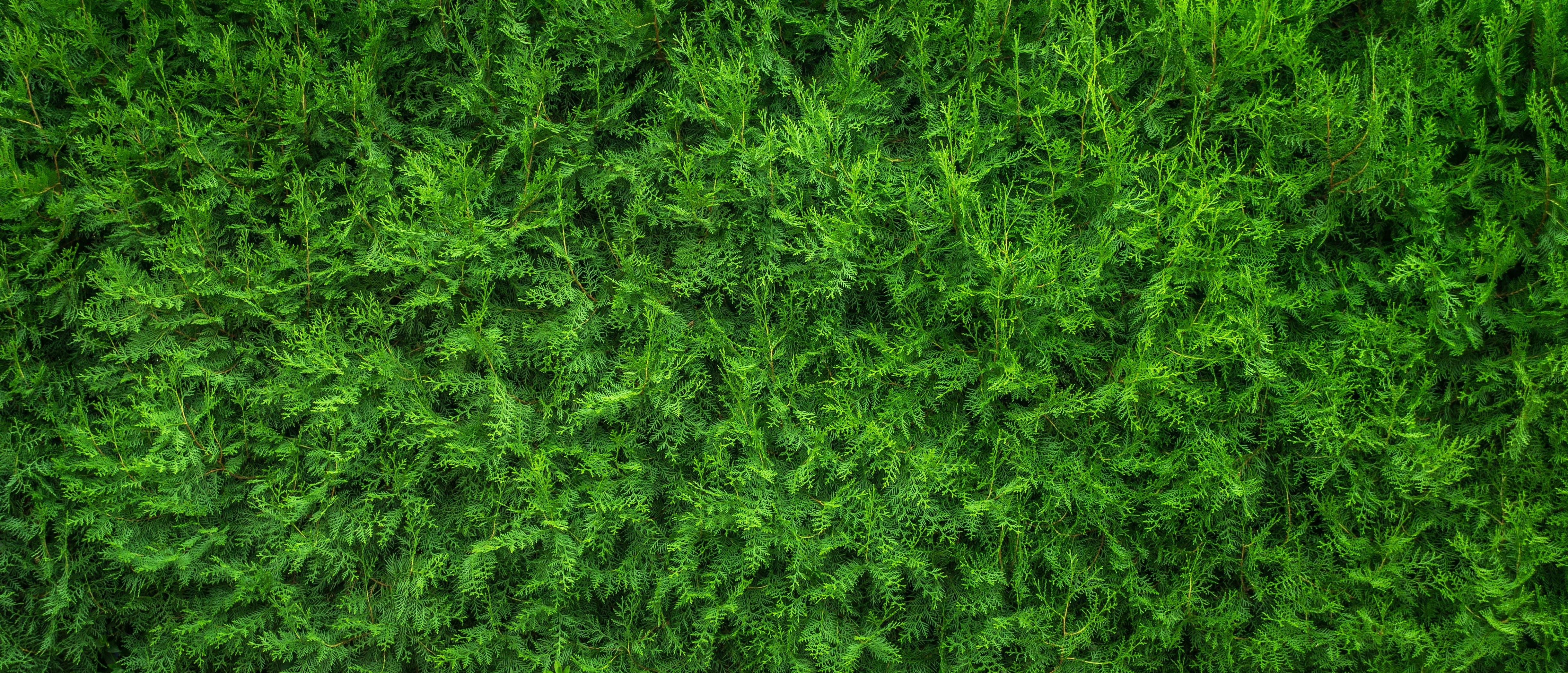 Gratis lagerfoto af close-up, grøn, HD-baggrund, kraftværker