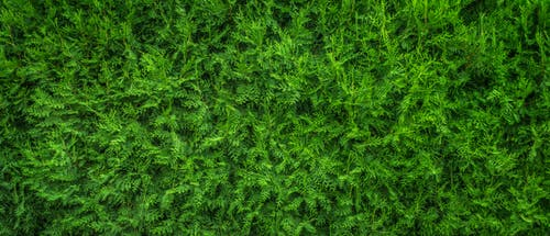 High-view Photography of Green Tree