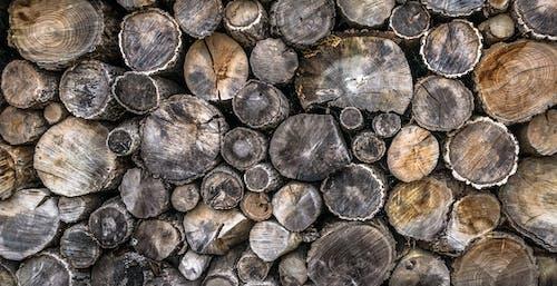 Foto d'estoc gratuïta de corba, estampat, fons, fusta abrinada
