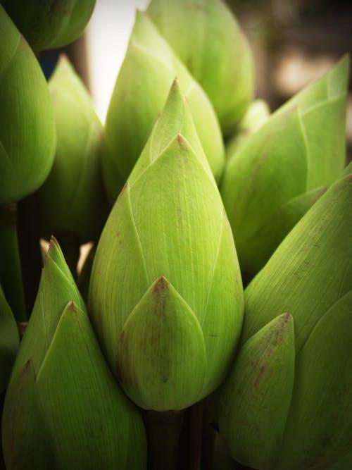 Fotobanka sbezplatnými fotkami na tému botanický, čerstvý, flóra, jasnosť