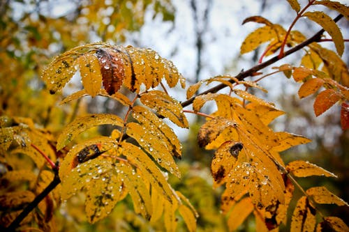 güz yaprakları içeren Ücretsiz stok fotoğraf