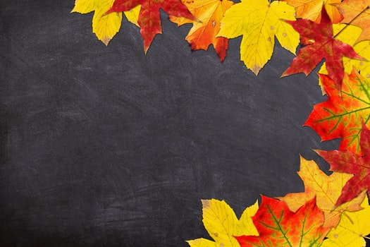 Free stock photo of red, yellow, school, leaf
