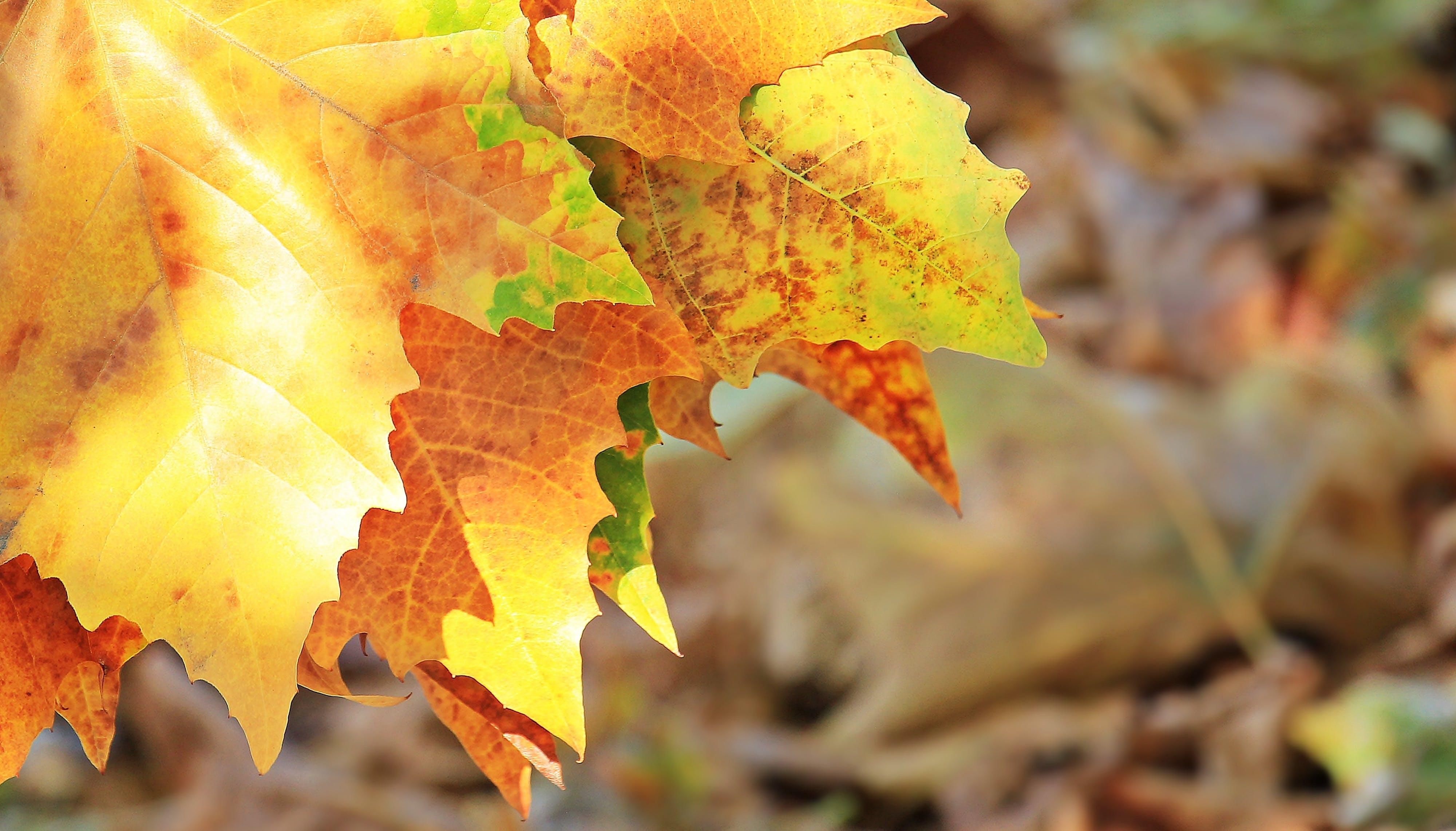 Free stock photo of autumn, autumn colours, autumn greetings, autumn mood