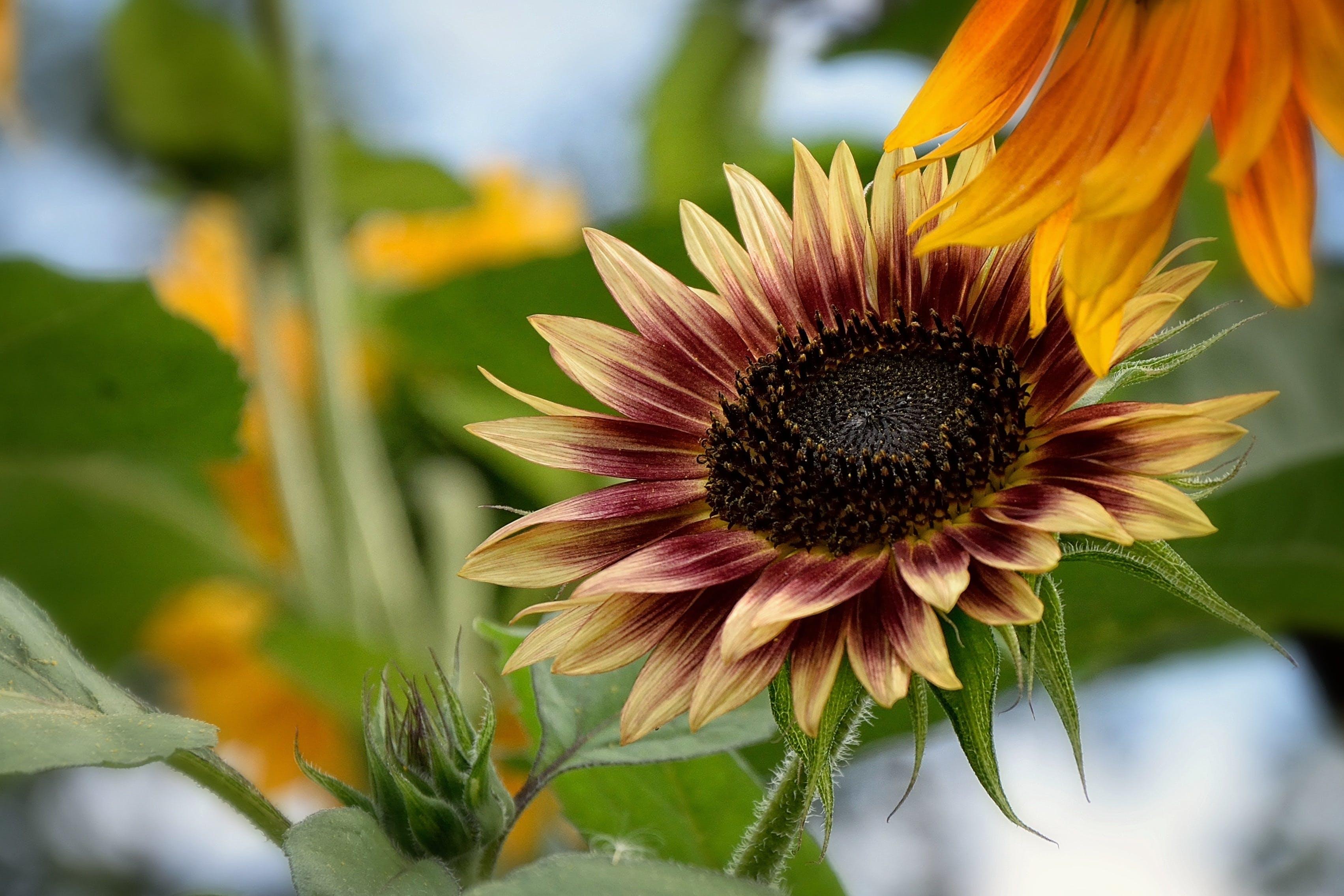 Free stock photo of summer, sun, garden, yellow
