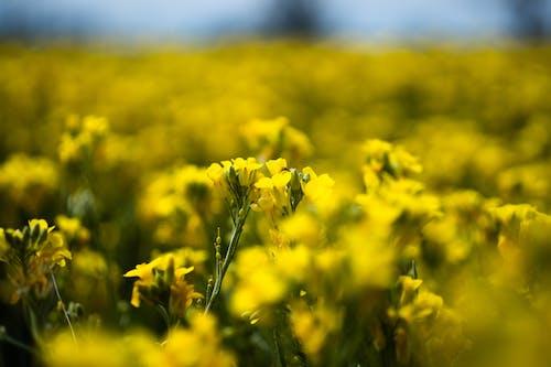 Ảnh lưu trữ miễn phí về ánh sáng mặt trời, bó hoa, cận cảnh, cánh đồng