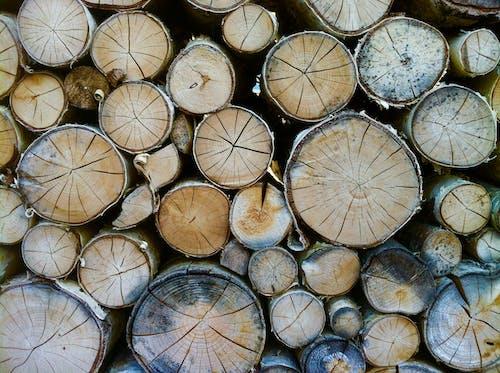 Kostnadsfri bild av bark, brännved, former, grov