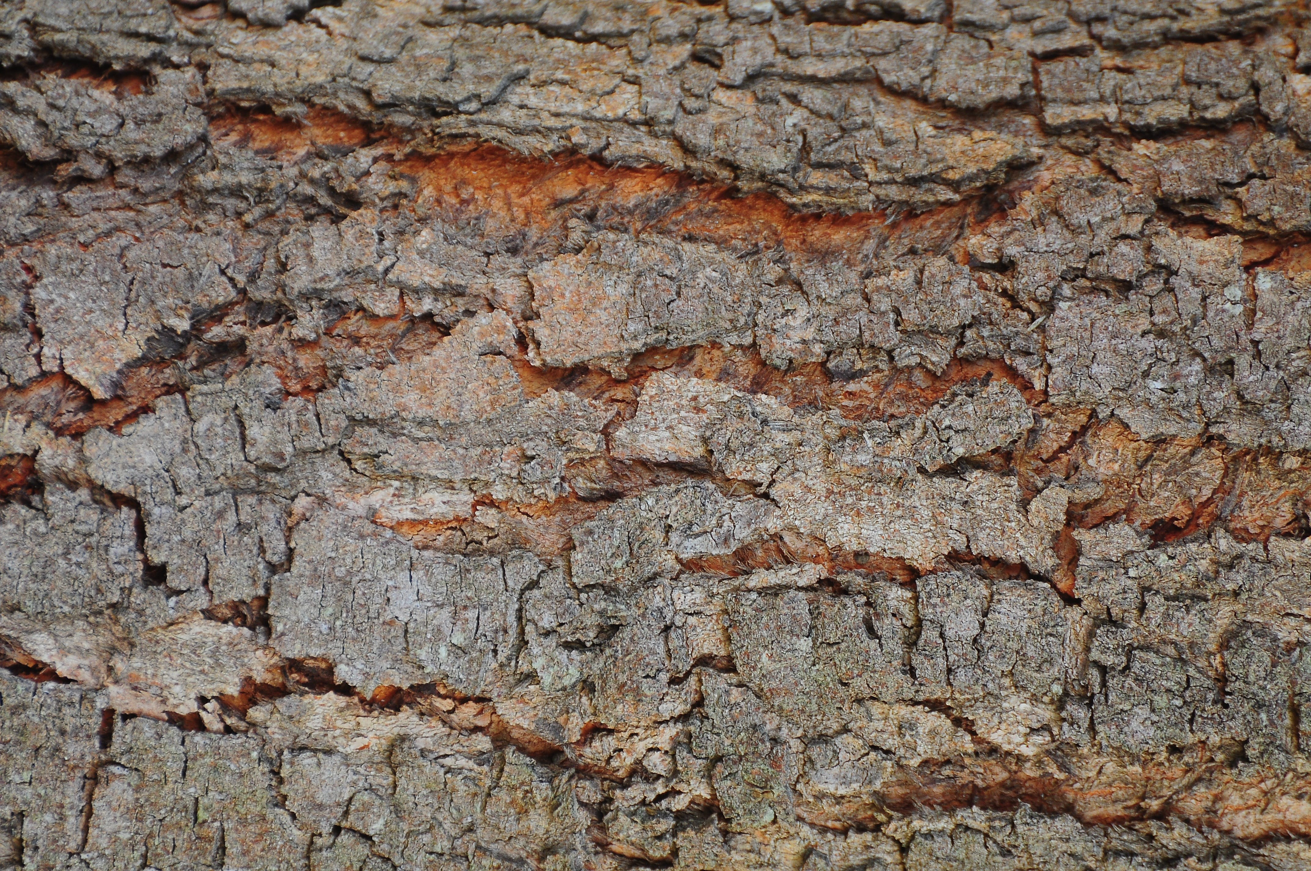 Free stock photo of wood, dirty, dry, texture