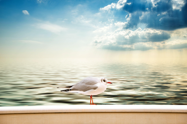 Free stock photo of sea, sky, clouds, lake