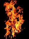 firewood, fire, hot