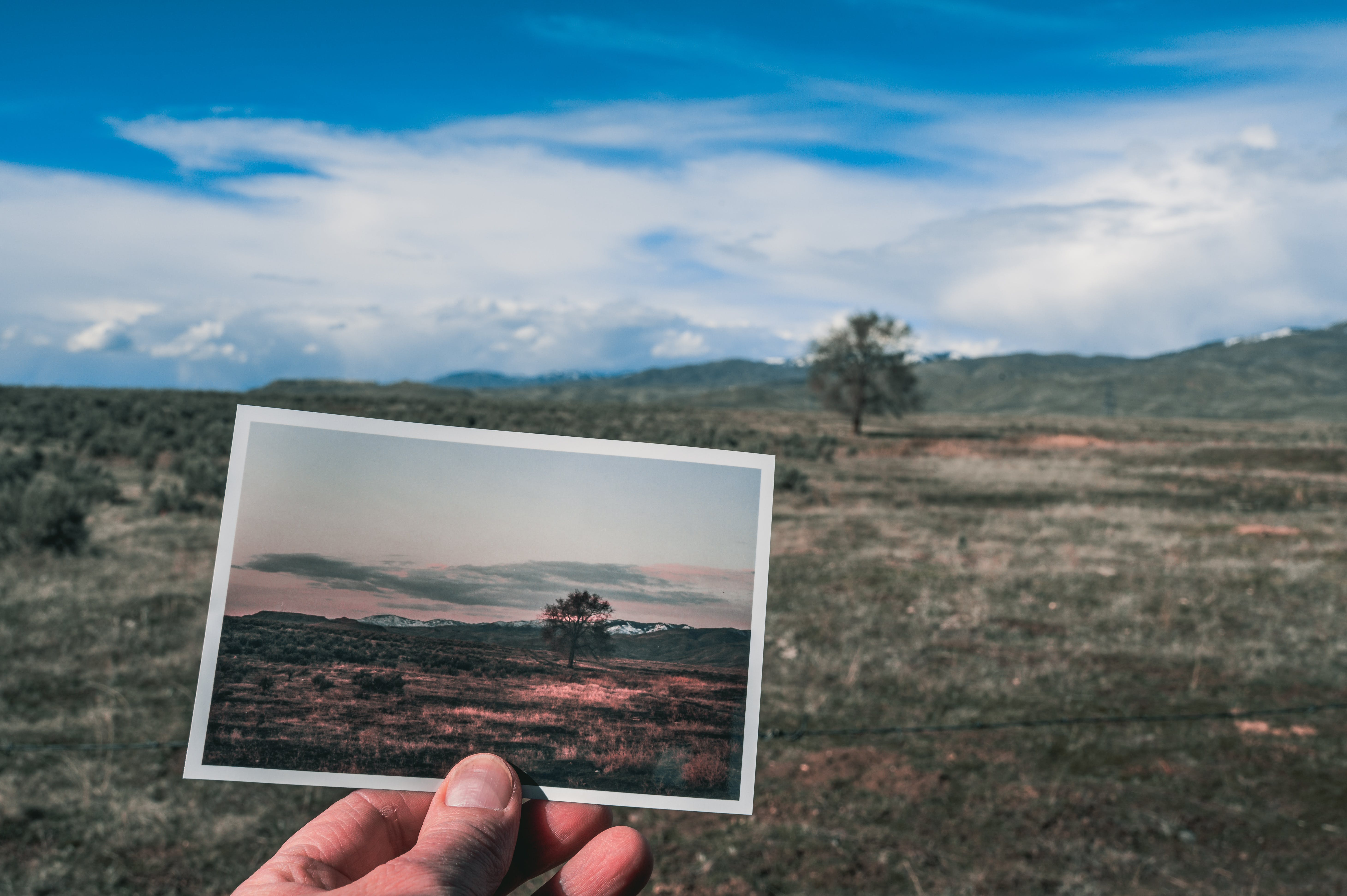 Fotos de stock gratuitas de árbol, campo, césped, concentrarse