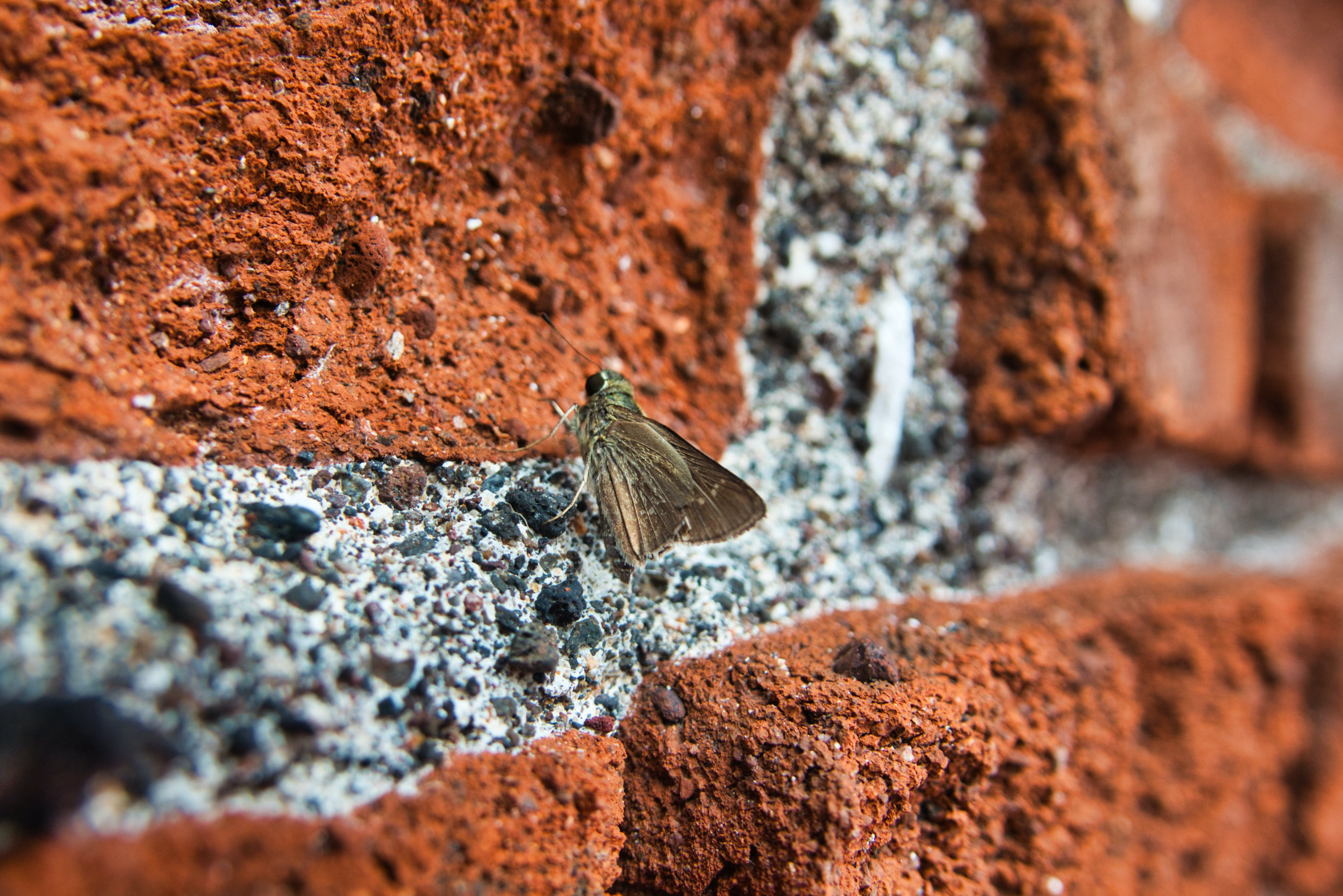 Free stock photo of brick, butterfly, color, dark