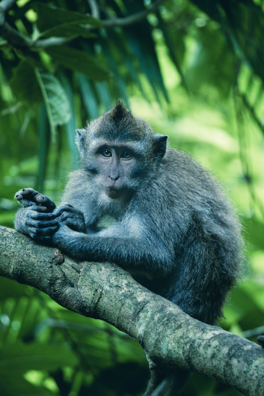 ぼかし, ジャングル, フォーカス, モンキーの無料の写真素材