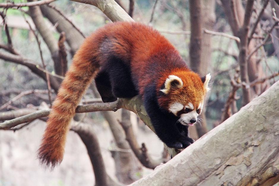 adorable, animal, asia