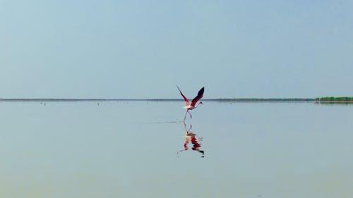 Základová fotografie zdarma na téma #příroda, divoký, plameňák