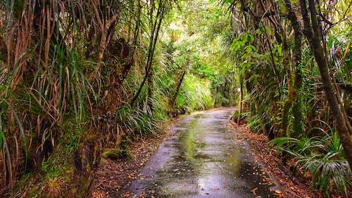 Ingyenes stockfotó erdő, zöld témában