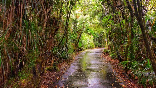 Immagine gratuita di foresta, verde