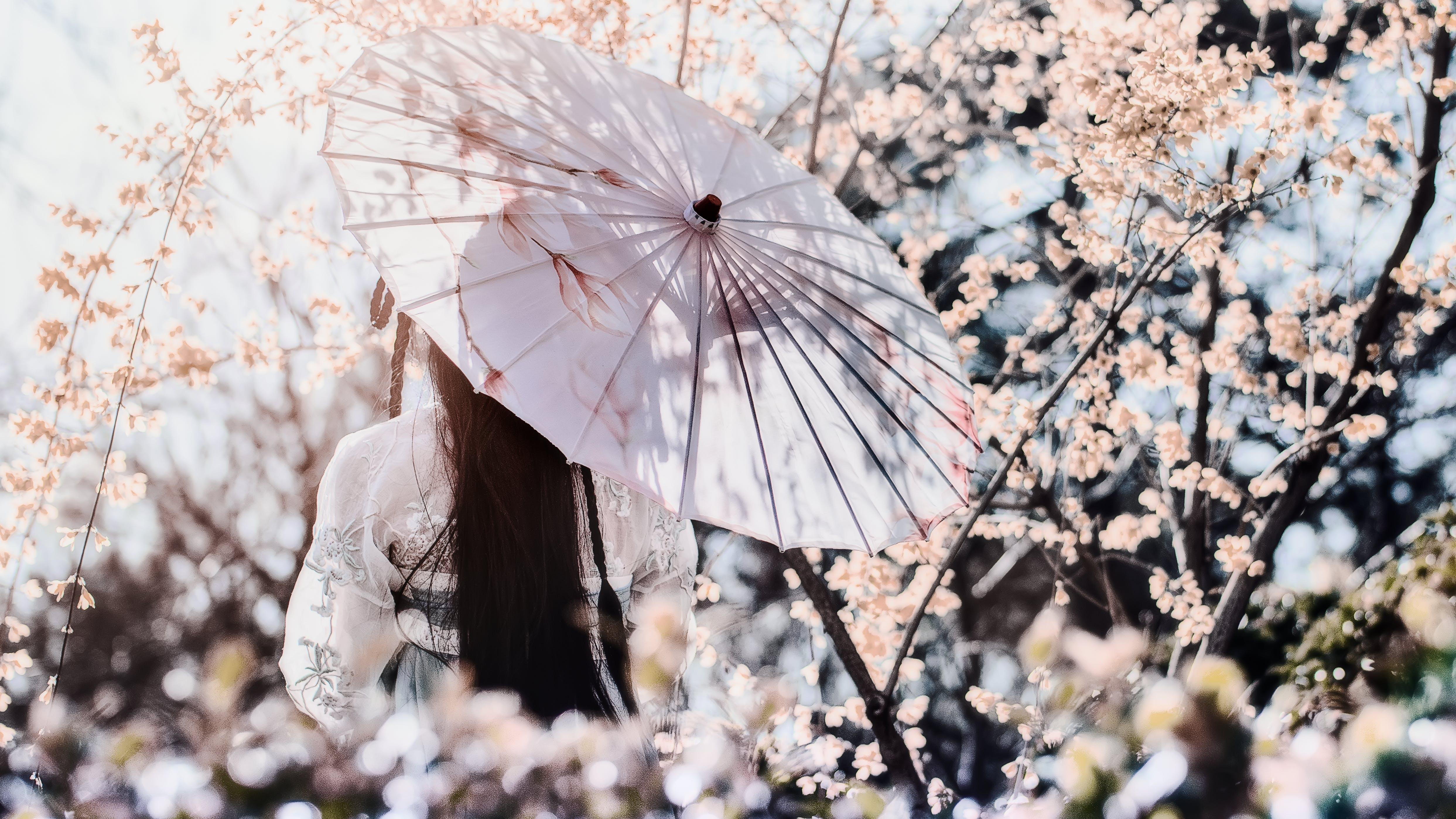 Gratis stockfoto met achteraanzicht, bloeien, bloeiend, bloemen