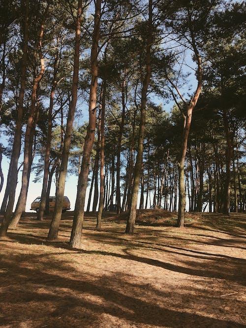 Ilmainen kuvapankkikuva tunnisteilla havupuut, kesä, luonto, maisema