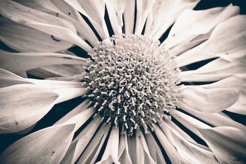 Fotos de stock gratuitas de blanco y negro, bonito, brillante, brotar