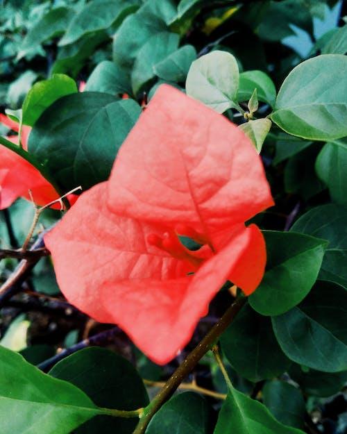Foto d'estoc gratuïta de flors taronges, fotògraf, fotografia de natura, natura