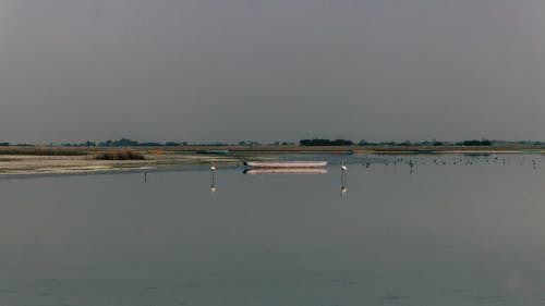 Free stock photo of #nature, flamingo, wild