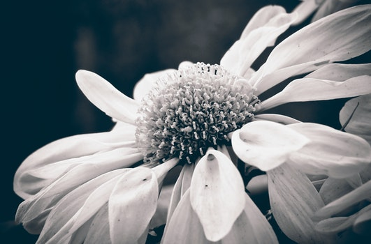 Free stock photo of black-and-white, nature, summer, garden