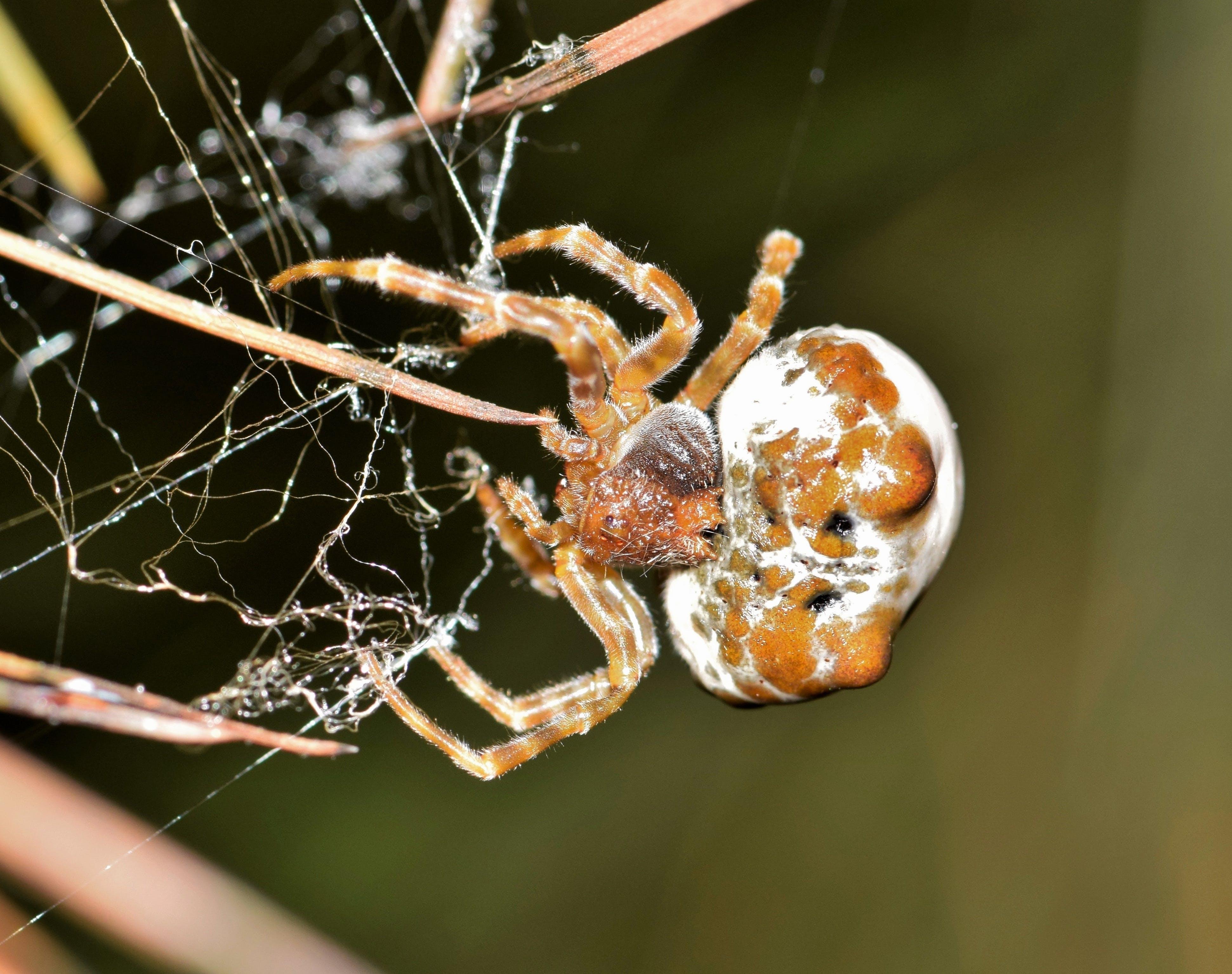 Free stock photo of animal, arachnid, arachnophobia, arthropod