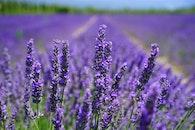 nature, field, flowers