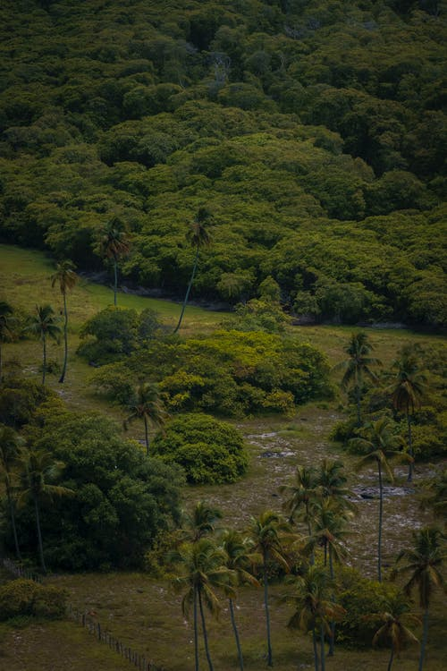 Free stock photo of Árvores, floresta, trees, wallpaper