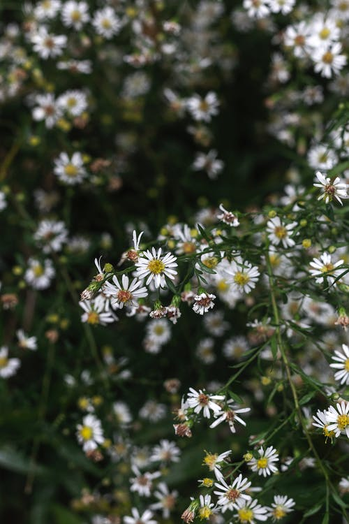 Free stock photo of 4k wallpaper, beautiful flower, flower, wallpaper