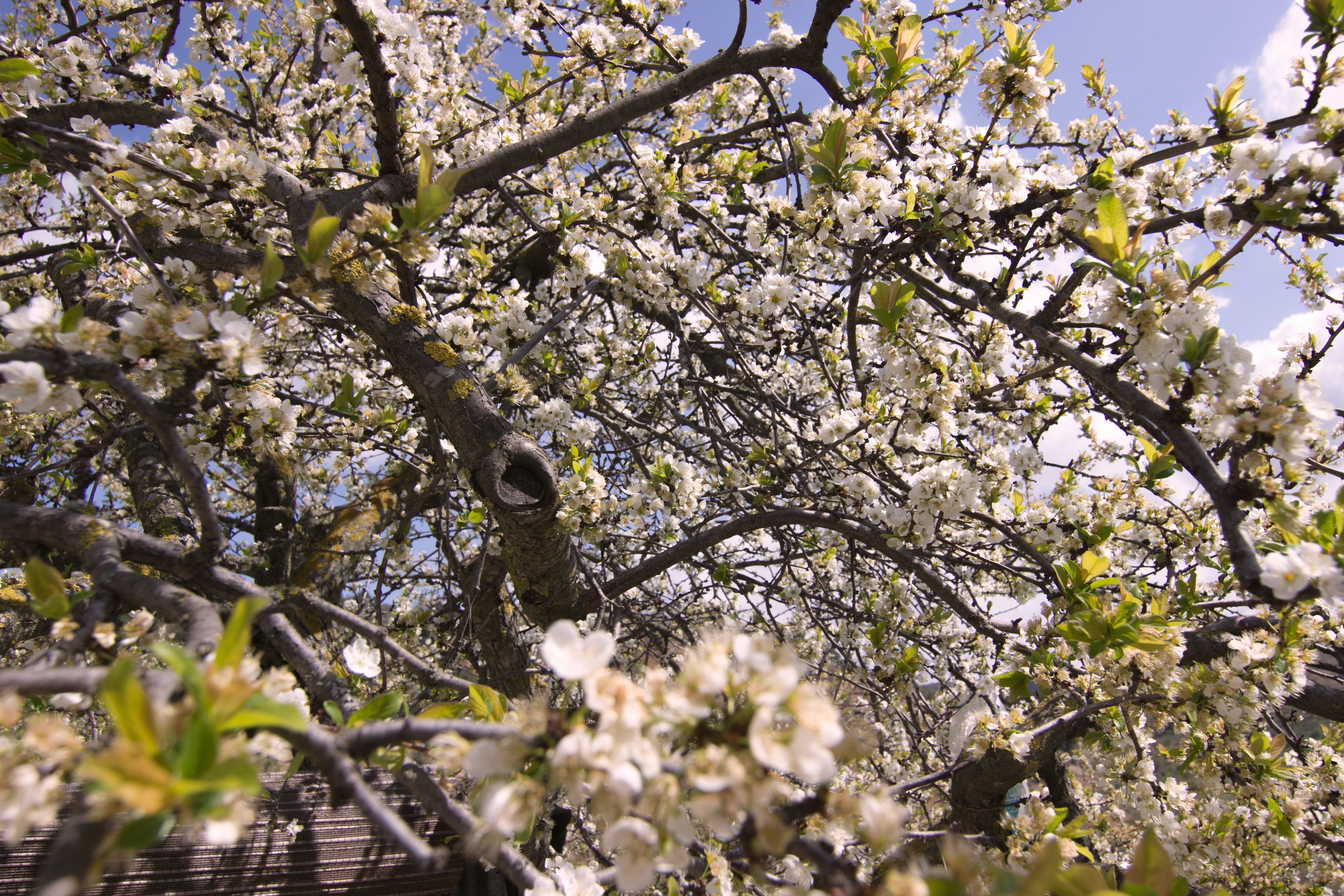 Fotos de stock gratuitas de árbol, nubes, planta, sol