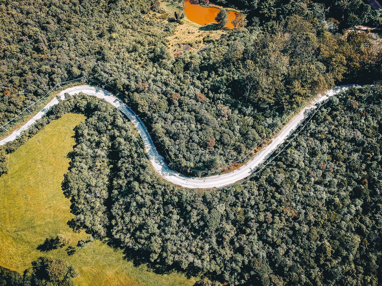 Бесплатное стоковое фото с вид сверху, деревья, дневной свет, дорога