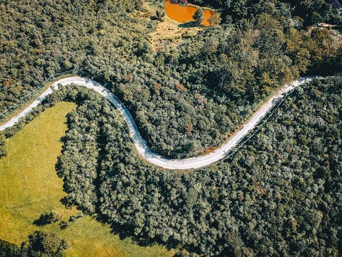 Aerial Photo of Curved Road in Between Trees