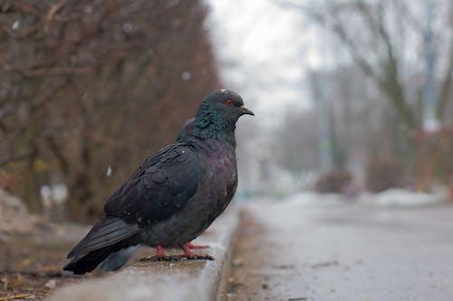 Foto stok gratis burung dara, kota, salju, весна