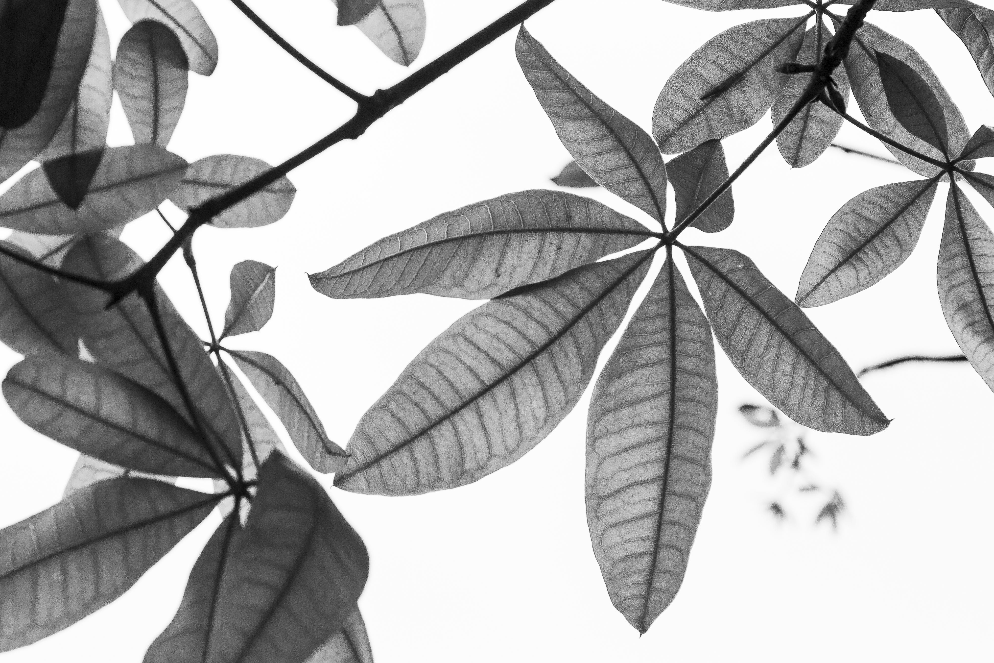 Grayscale Photography of Plant