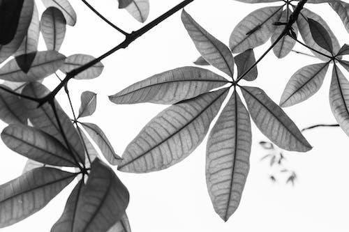 블랙 앤 화이트, 색깔, 성장, 아름다운의 무료 스톡 사진